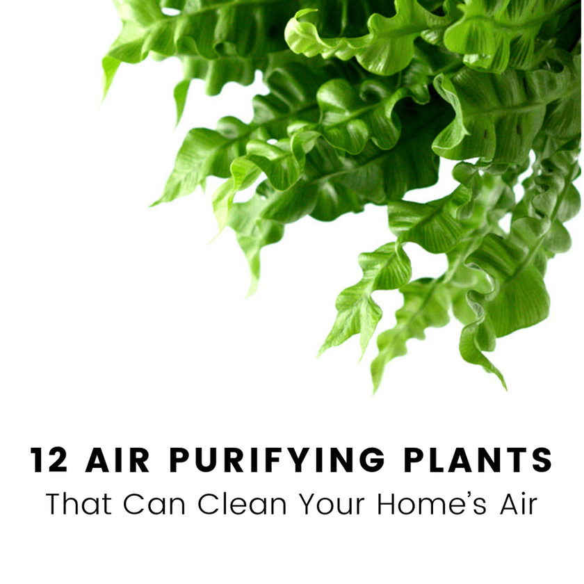 12 Air-Purifying Plants That Can Clean Your Home's Air