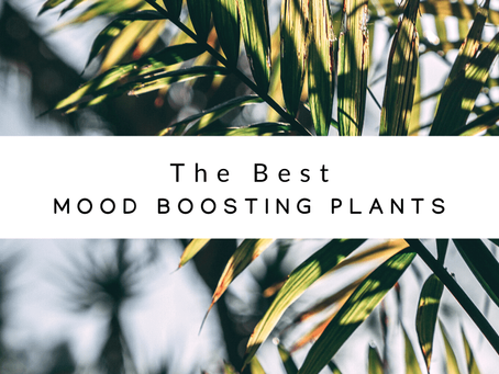 Best Mood-Boosting Plants