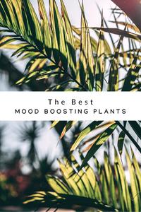 Best Mood-Boosting Plants