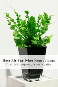 Purifying Houseplants Health