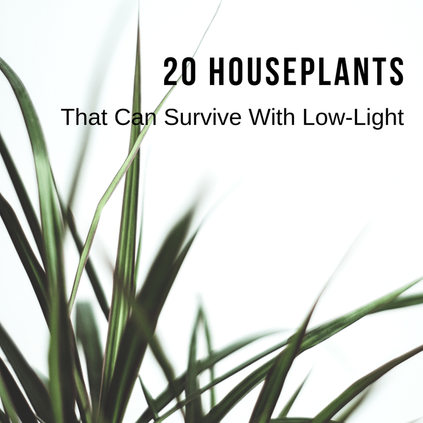 20 Houseplants That Can Survive With Low-Light