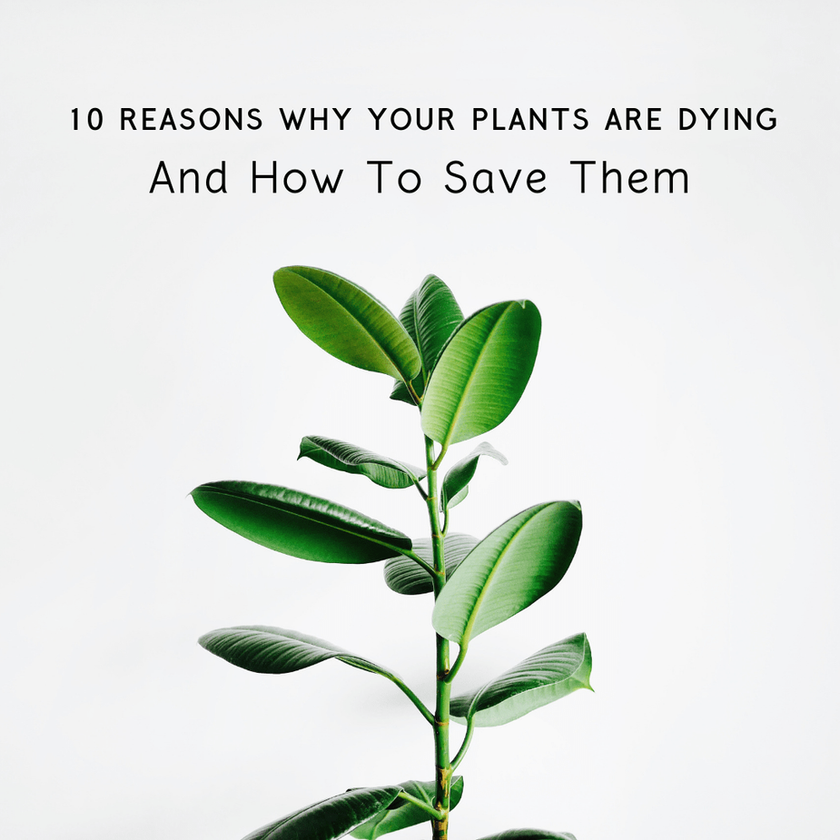 10 Reasons Why Your Plants Are Dying And How To Save Them
