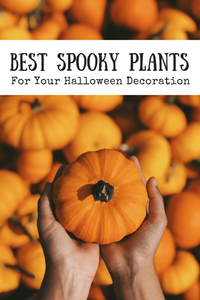 Best Spooky Plants For Your Halloween Decoration