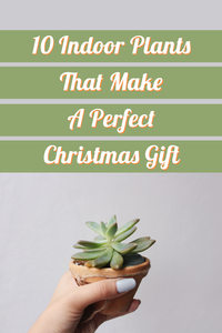 10 Indoor Plants That Make A Perfect Christmas Gift