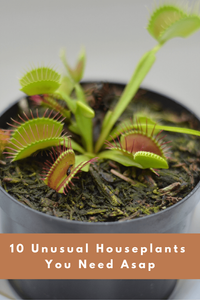 10 Rare And Unusual Houseplants You Need Asap