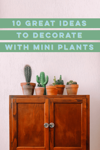 10 Great Ideas To Decorate With Mini Plants