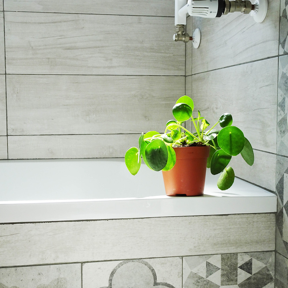 Pilea Peperomioides small plants great for bathrooms