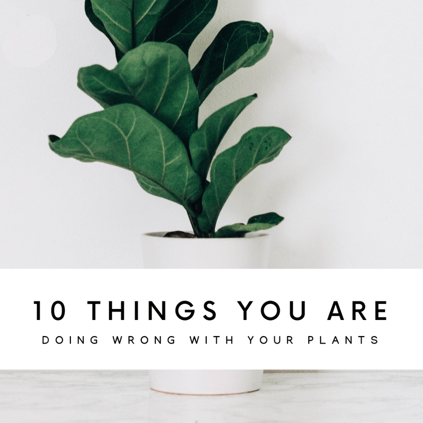 10 Things You Are Probably Doing Wrong With Your Plants