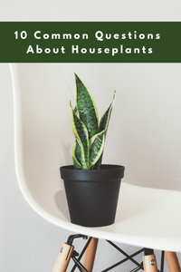 10 Common Questions About Houseplants Answered
