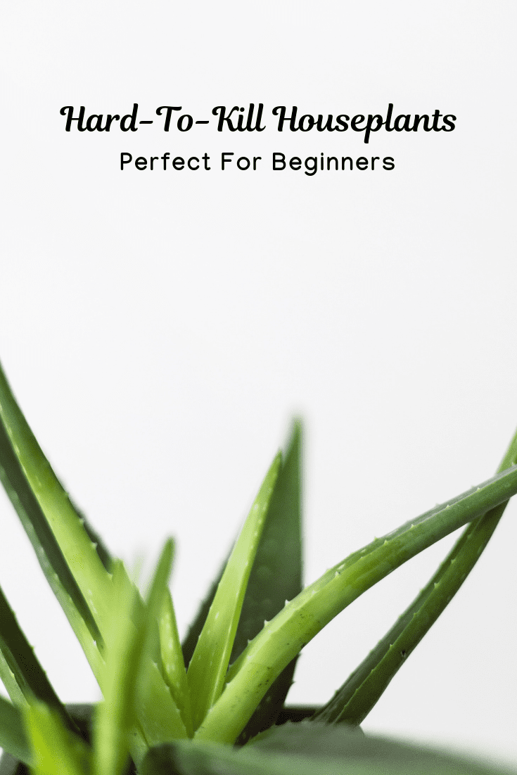 Hard-To-Kill Houseplants Perfect For Beginners