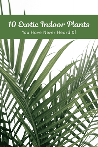 10 Exotic Houseplants You Have Never Heard Of