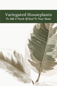 Variegated Houseplants That Will Add A Touch Of Soul To Your Home