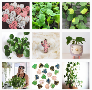 Pilea Peperomioides Instagram Profile pileaplace