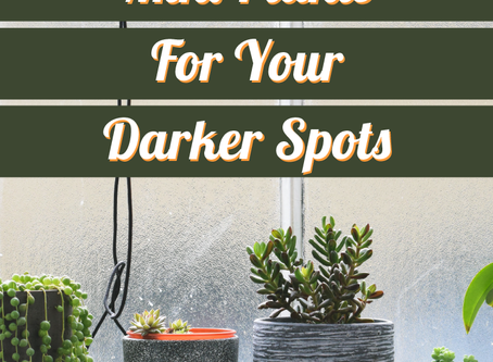 Best Low-Light Small Plants For Your Tiny Darker Spots