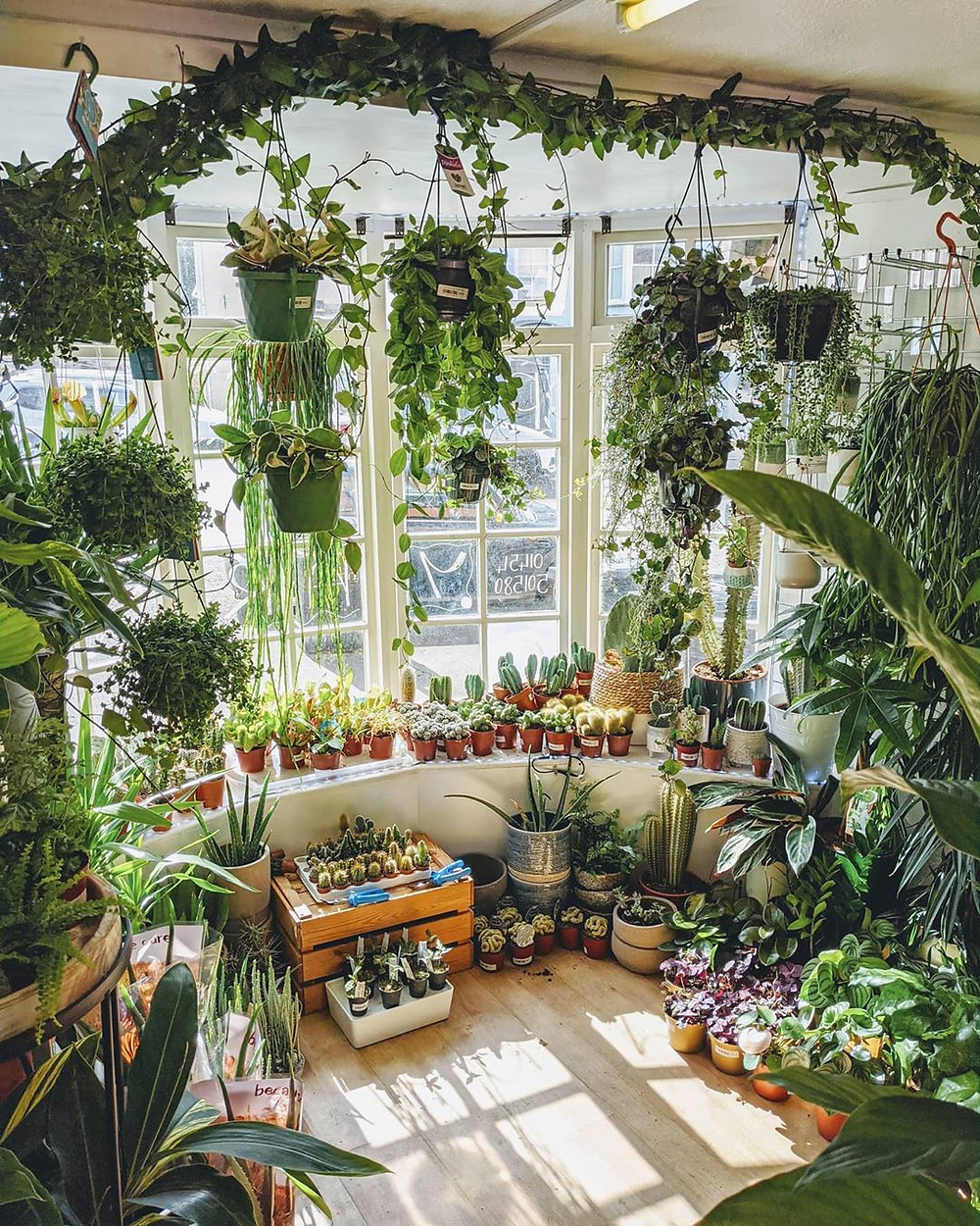 Interior Design Ideas To Make You Happier At Home Living With Houseplants