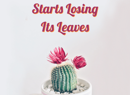 What To Do If Your Plant Starts Losing Its Leaves
