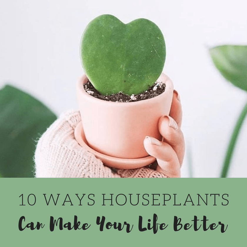 10 Ways Houseplants Can Make Your Life Better