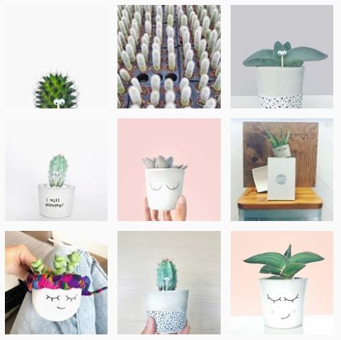 thecacticus Instagram Profiles To Follow If You Love Baby Plants