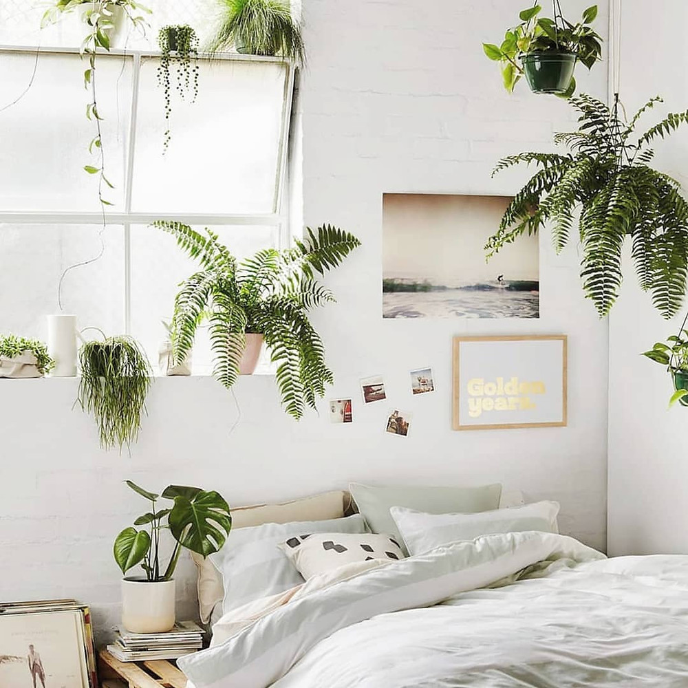Benefits of Living With Houseplants