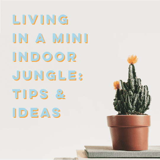 Living In A Mini Indoor Jungle: Tips And Ideas