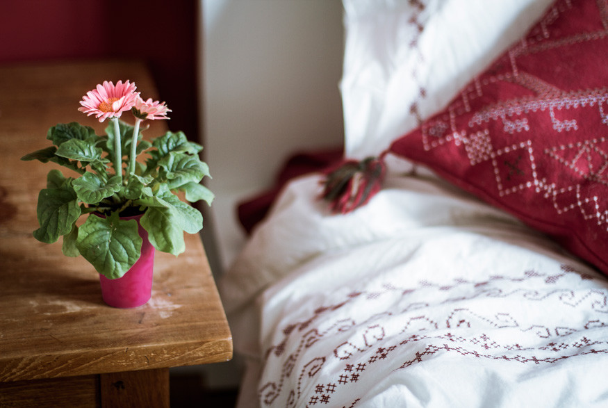 Gerbera Daisy Plants for Bedroom Sleep