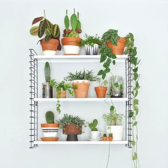 Houseplants Decor Plant Shelf