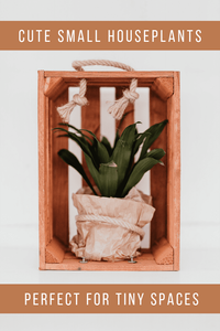 Cute Small Houseplants Perfect For Tiny Spaces