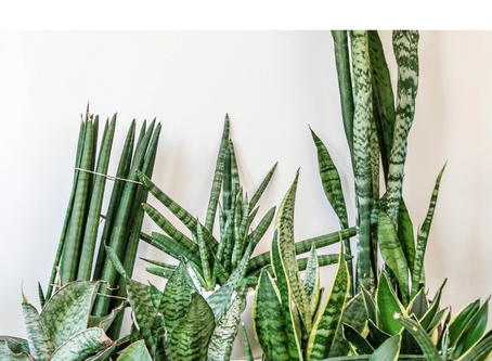 How To Improve Your Home Air Quality With Plants: A Complete Guide