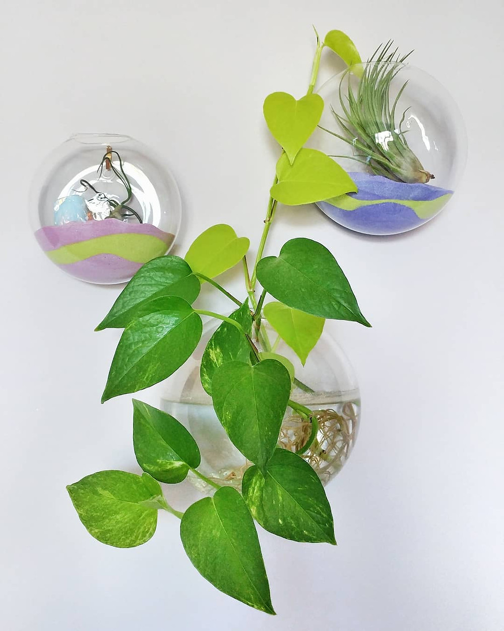 Pothos Houseplants You Can Propagate From Cuttings