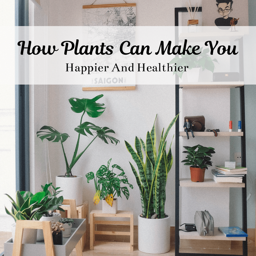 Here's How Plants Can Make You Happier And Healthier