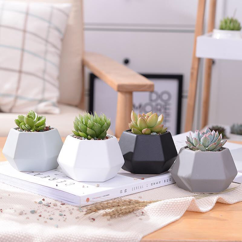 Houseplants Decor Ideas Geometric Pots