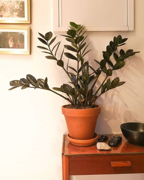 10 Popular Houseplants That Are Poisonous To Cats And Dogs