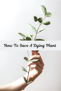 How To Save A Dying Plant: 10 Easy Steps