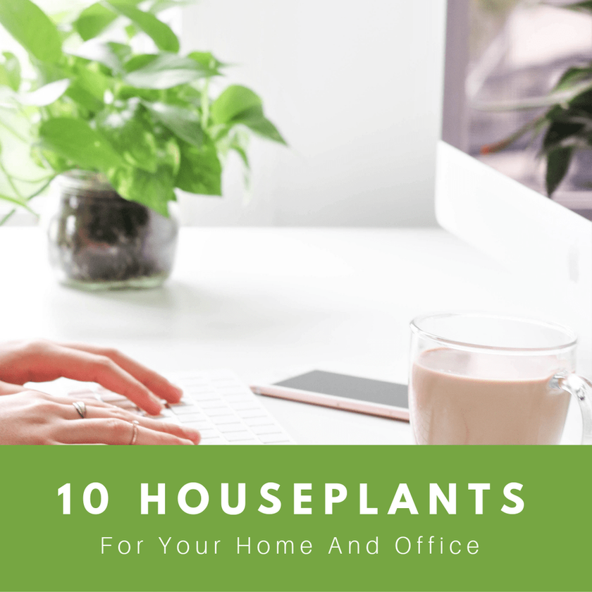 10 Houseplants For Your Home And Office