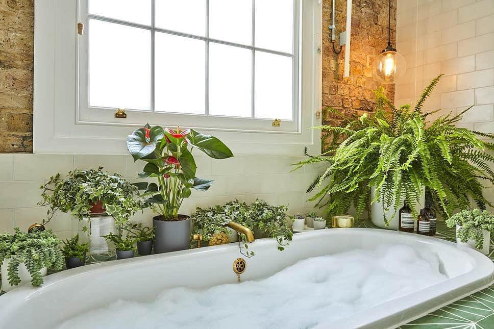 boston fern plants that do great in the bathroom