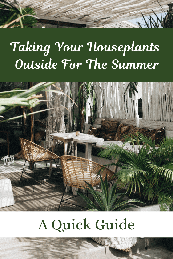 Taking Your Houseplants Outside For The Summer: A Quick Guide