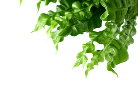Air-Purifying Plants That Can Clean Your Home's Air