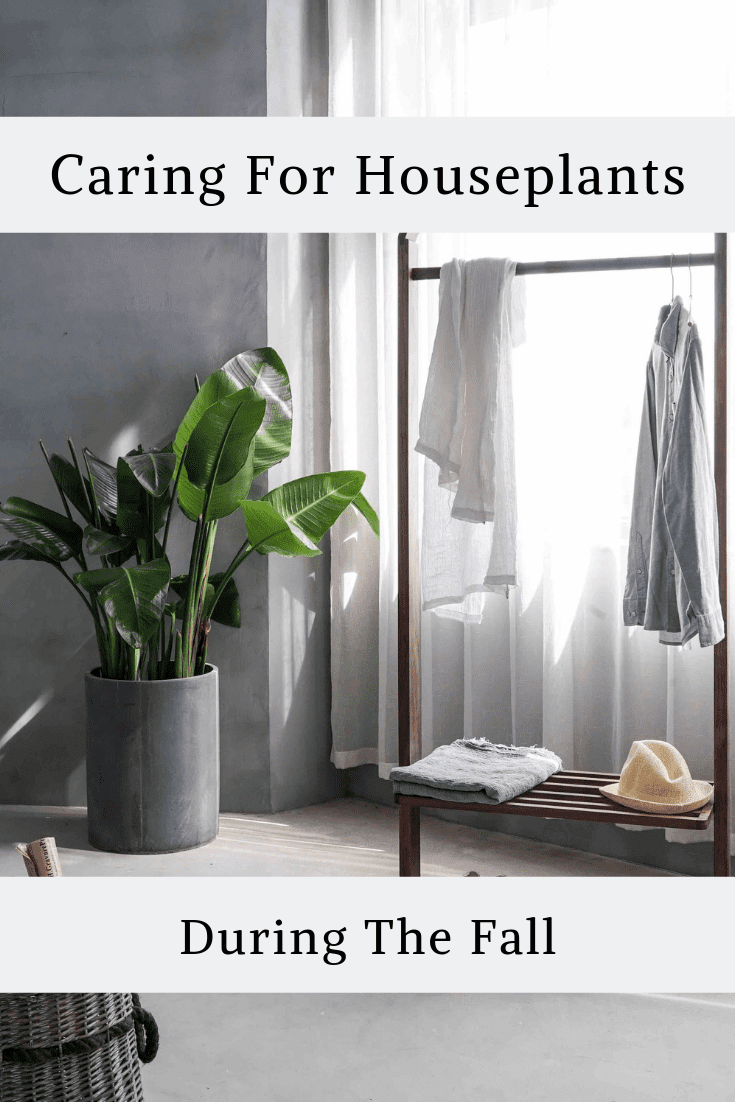 Caring For Houseplants During The Fall