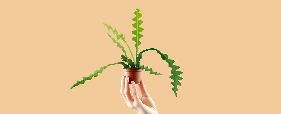 Fishbone Cactus 4.jpg