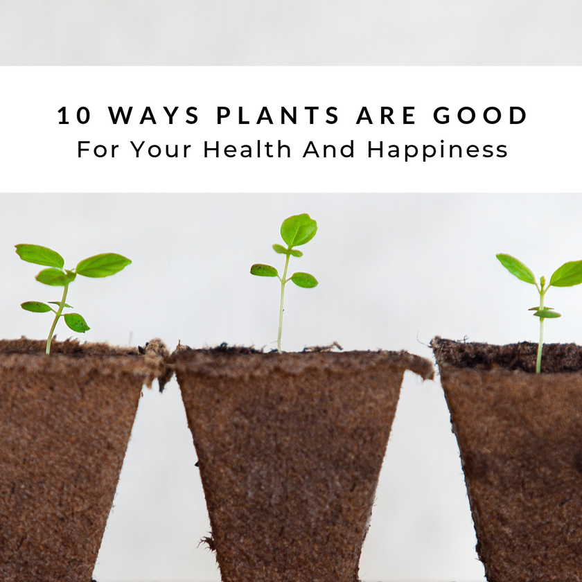 10 Ways Plants Are Good For Your Health And Happiness