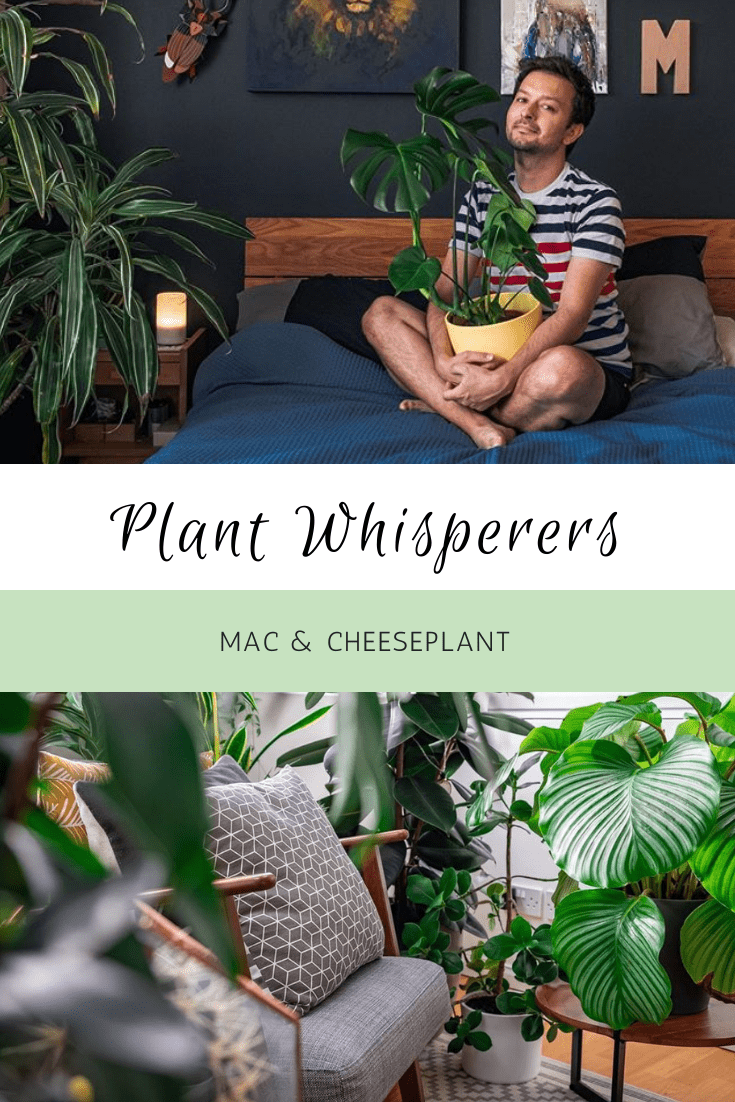 Plant Whisperers: Mac And Cheeseplant