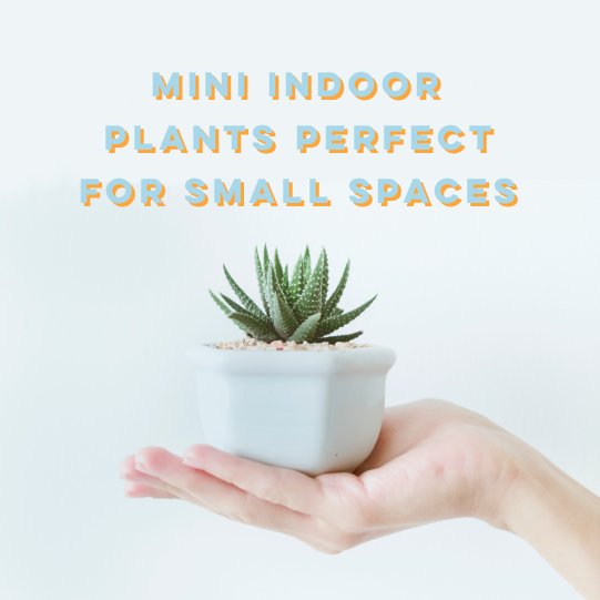 Mini Indoor Plants Perfect For Small Spaces
