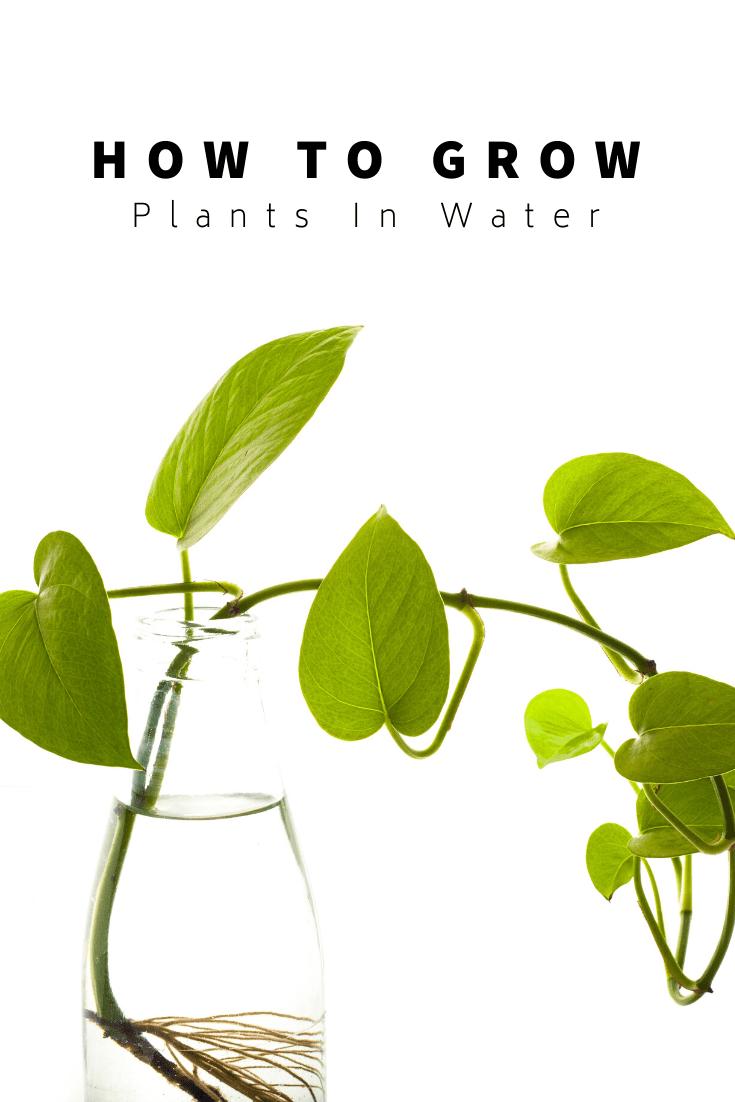 How To Grow Indoor Plants In Water