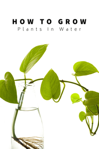 How To Grow Indoor Plants In Water