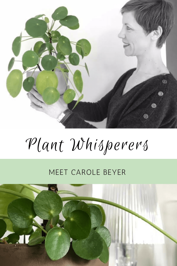 Houseplant Lovers Pilea Lovers Plant Whisperers Carole Beyer