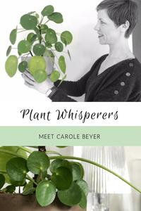 Houseplant Lovers Pilea Lovers Plant Whisperers Carole Beyer