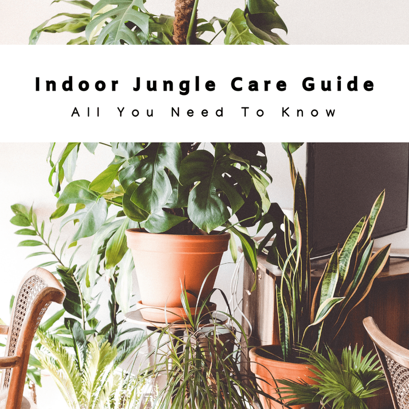 Houseplants Care Guide: All You Need To Know About Growing An Indoor Jungle