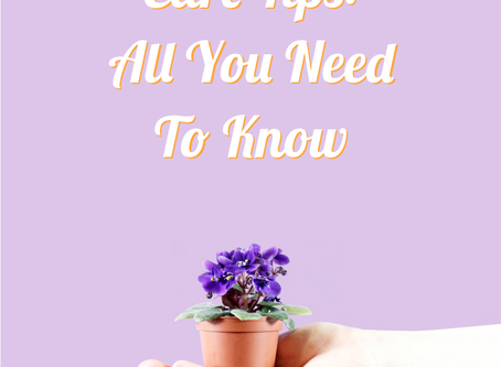 Mini African Violet Care Tips: All You Need To Know