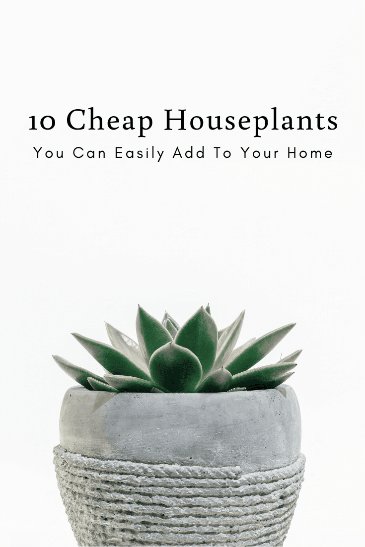 10 Cheap Houseplants You Can Easily Add To Your Home