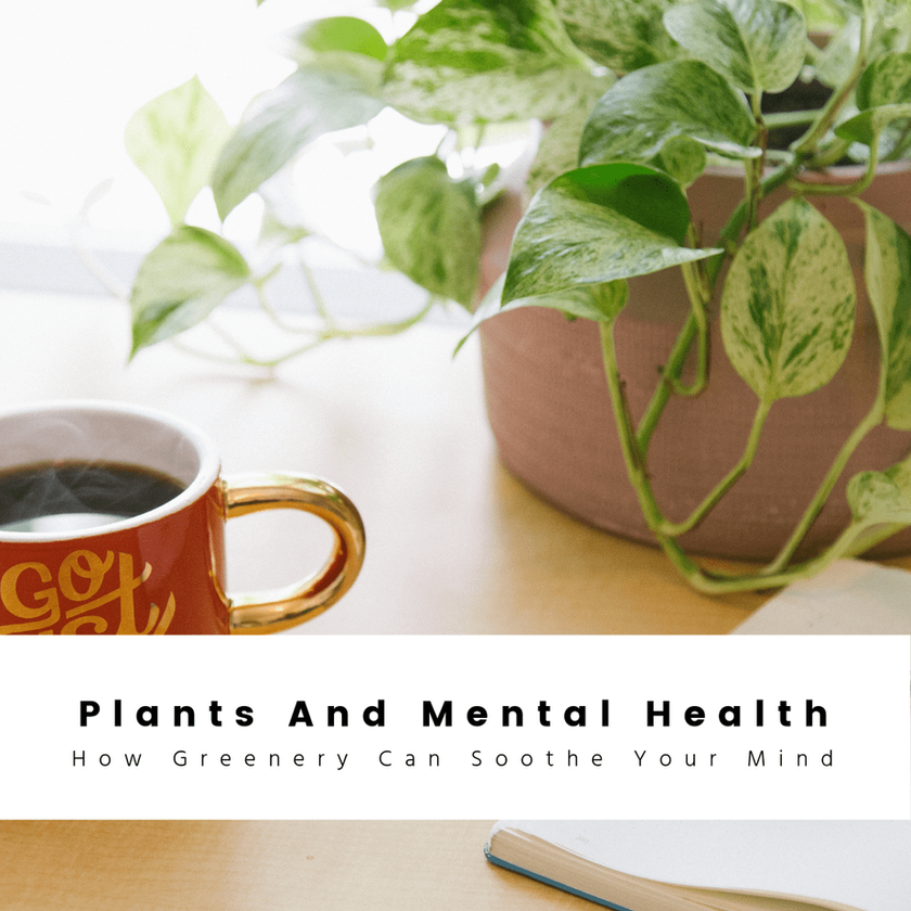 Houseplants And Mental Health: How Greenery Can Soothe Your Mind And Soul